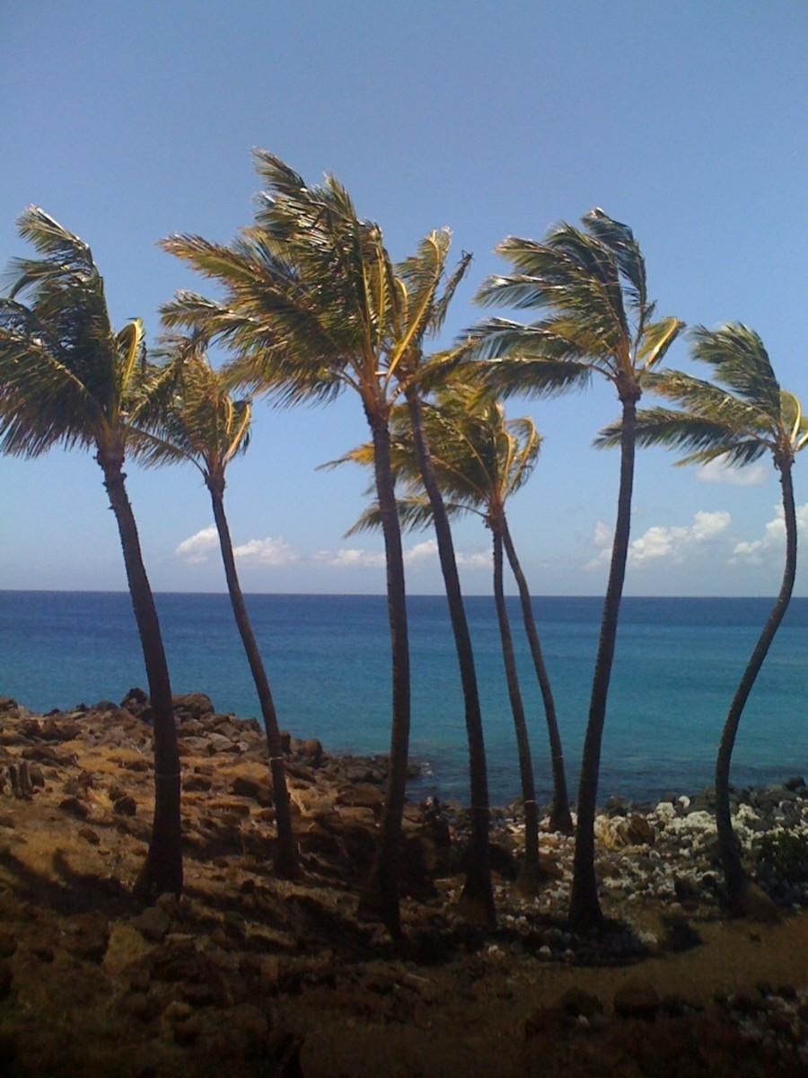 Camping on the Big Island of Hawaii