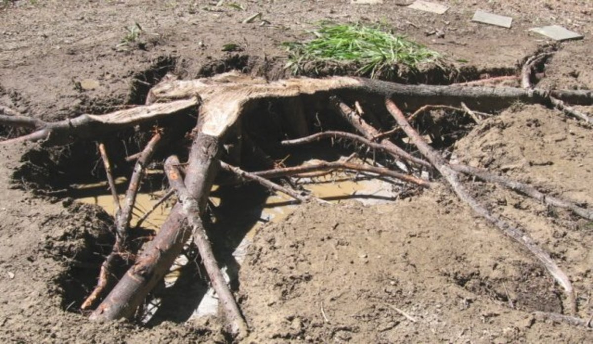 How to Remove Tree Stumps the Most Fun and Easy Way: With a Power Washer
