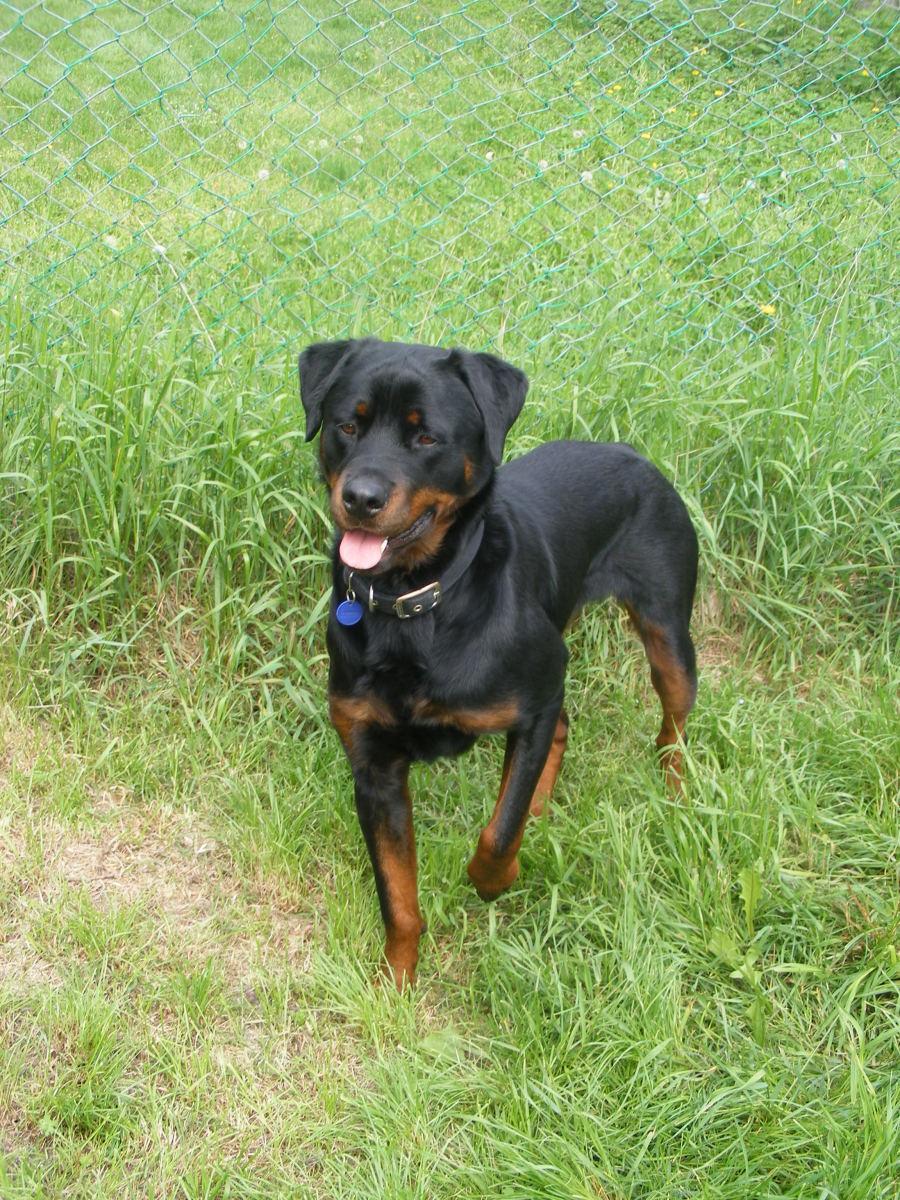 Understanding the Nature Versus Nurture Concept in Dogs