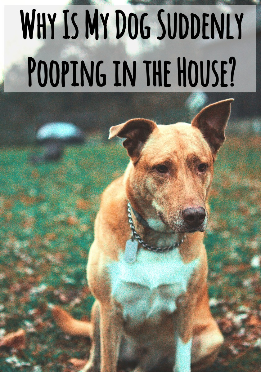 Dog suddenly poops in house.