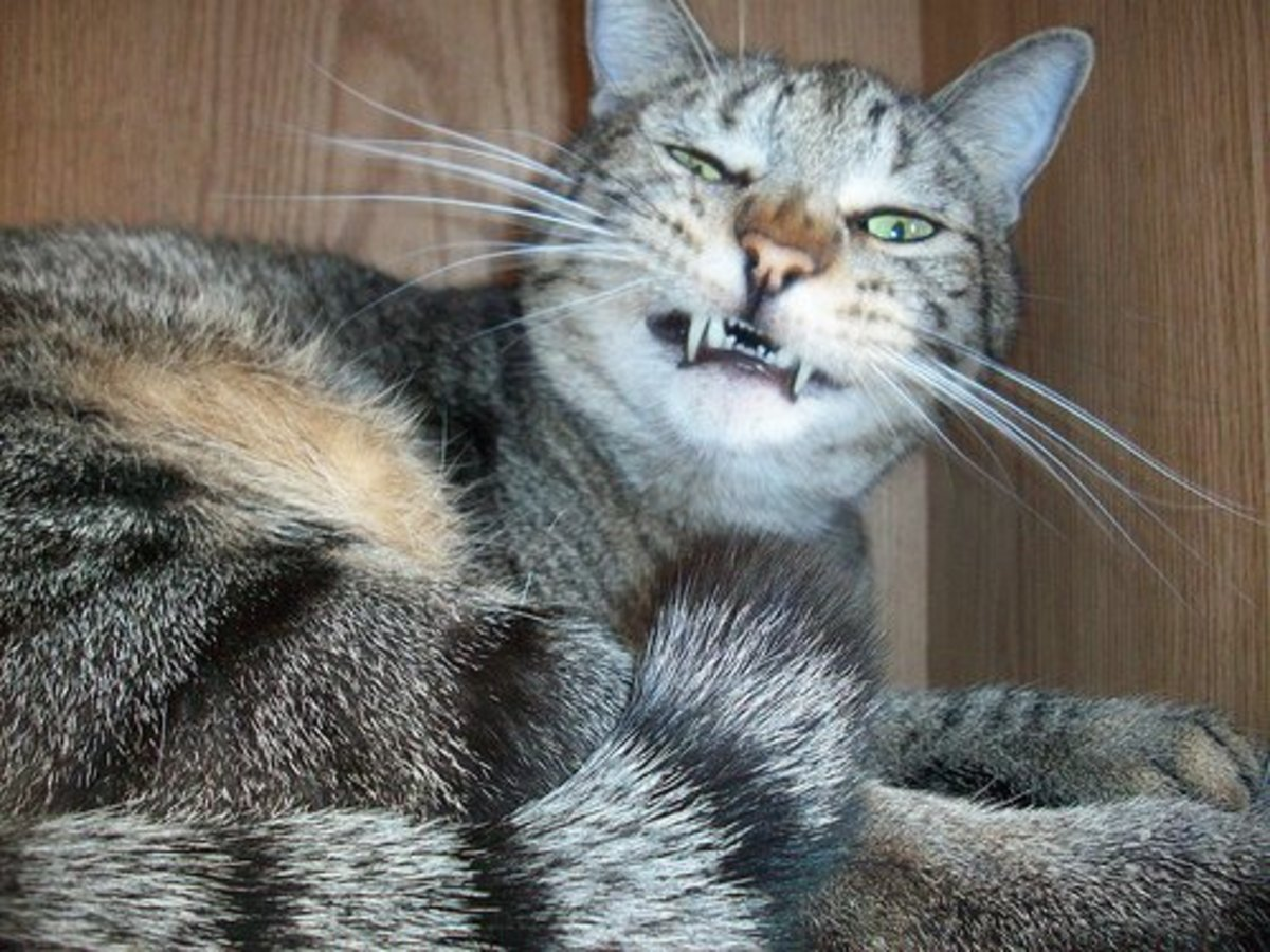 Why Is My Cat Sneezing Pethelpful By Fellow Animal Lovers And Experts