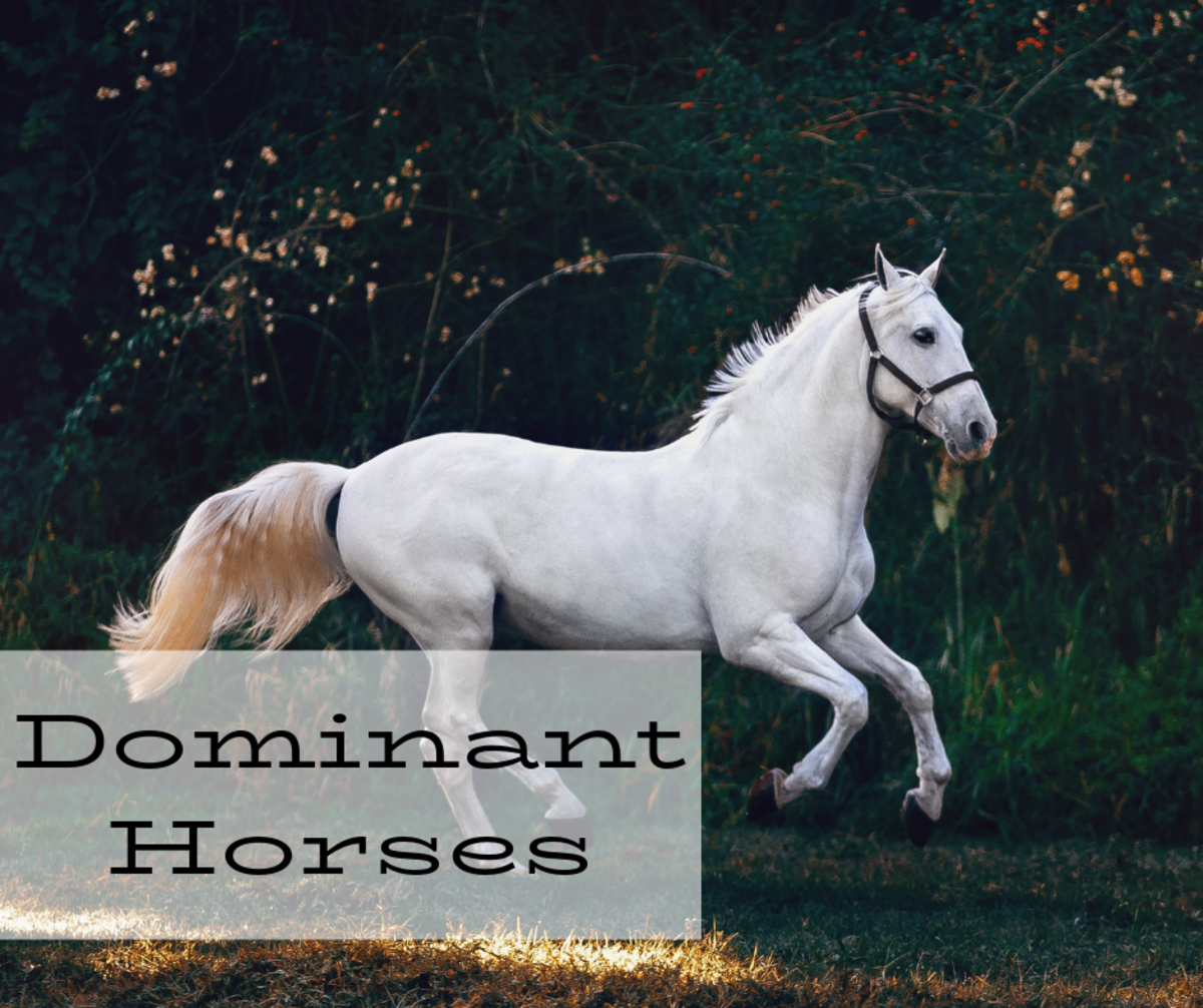 Dealing With the Dominant Horse | PetHelpful