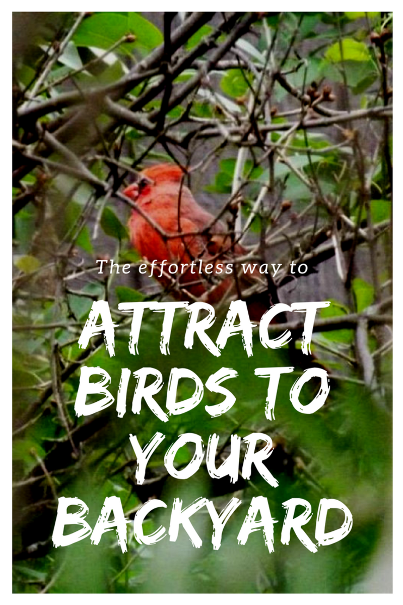 How To Attract Birds To Your Backyard how to attract birds to your backyard | dengarden