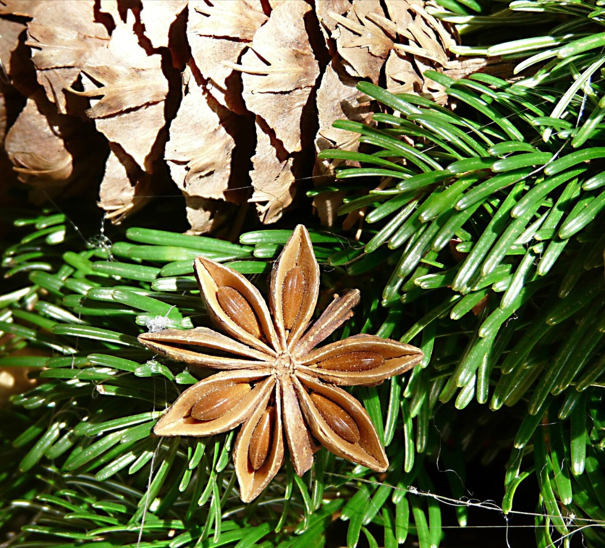 Star anise as part of an Advent wreath