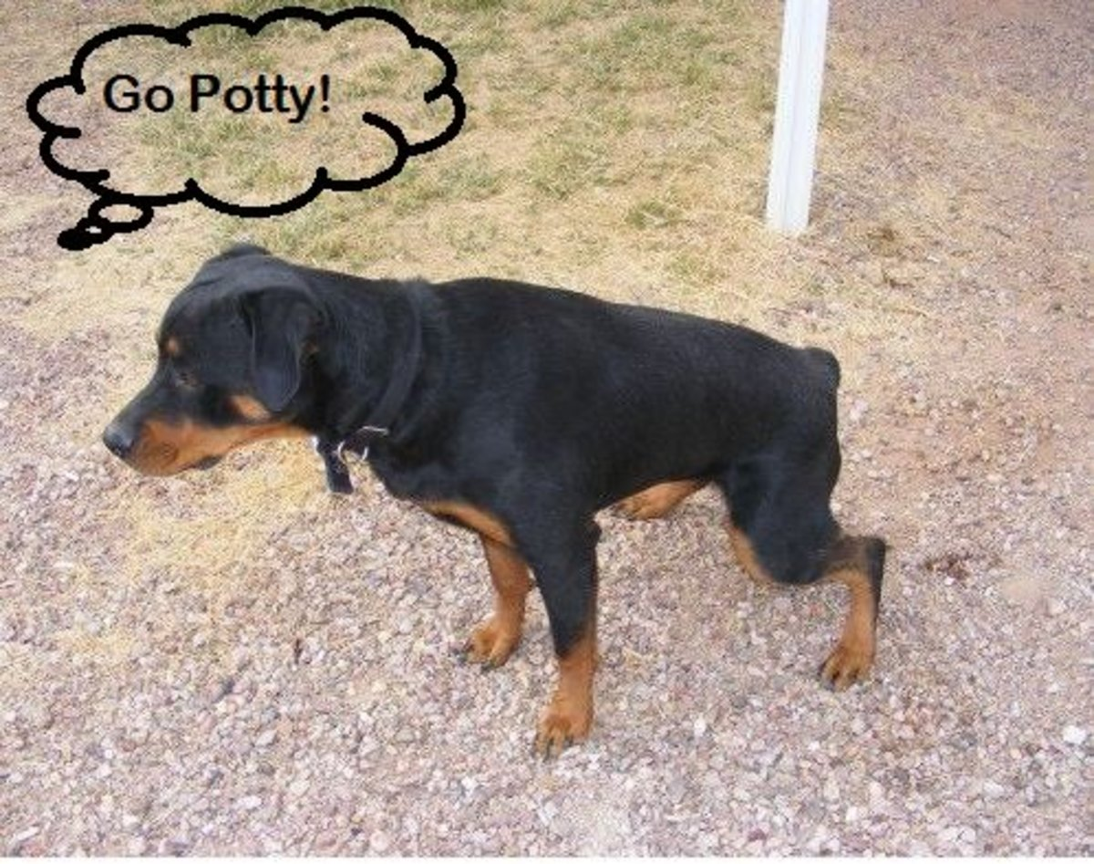 How to Train a Dog to Go Potty on Command
