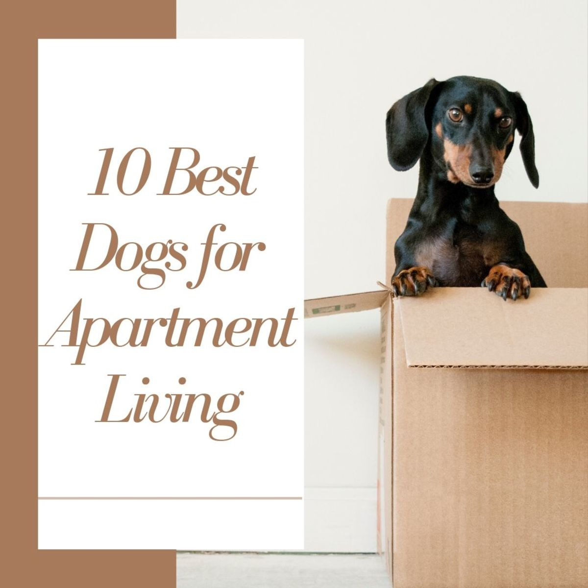 Learn all about the 10 best dog breeds for apartment living!