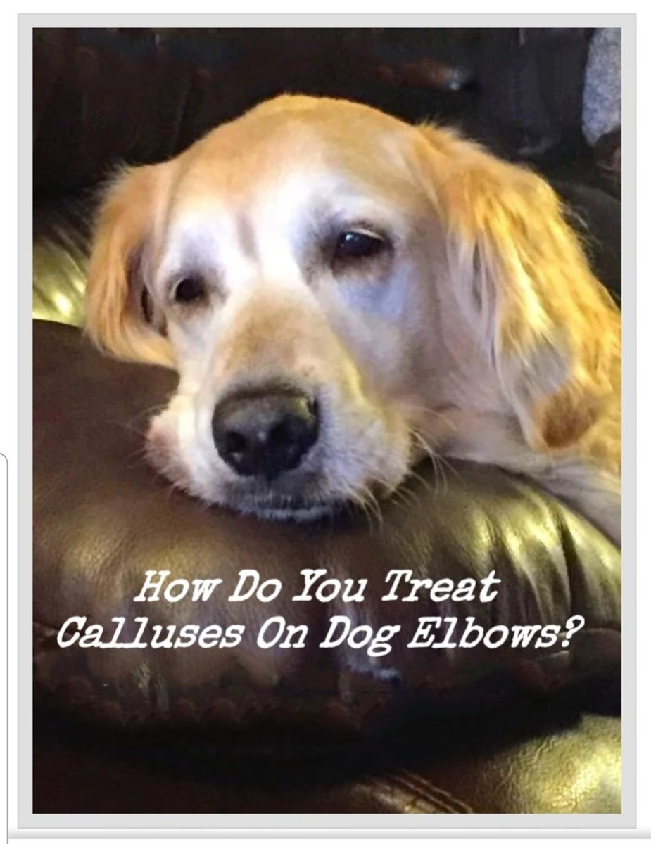How to Treat and Prevent Calluses on Dog Elbows That Can Bleed