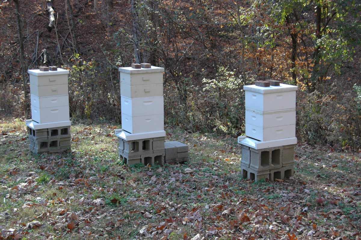 Beehives: A Guide to Choosing the Right Size Boxes | Dengarden