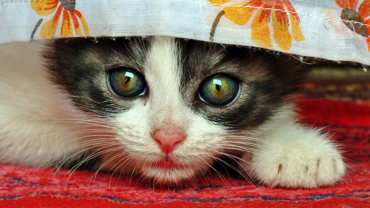 10 Logical Reasons Why Cats Are Cute (With Pictures)