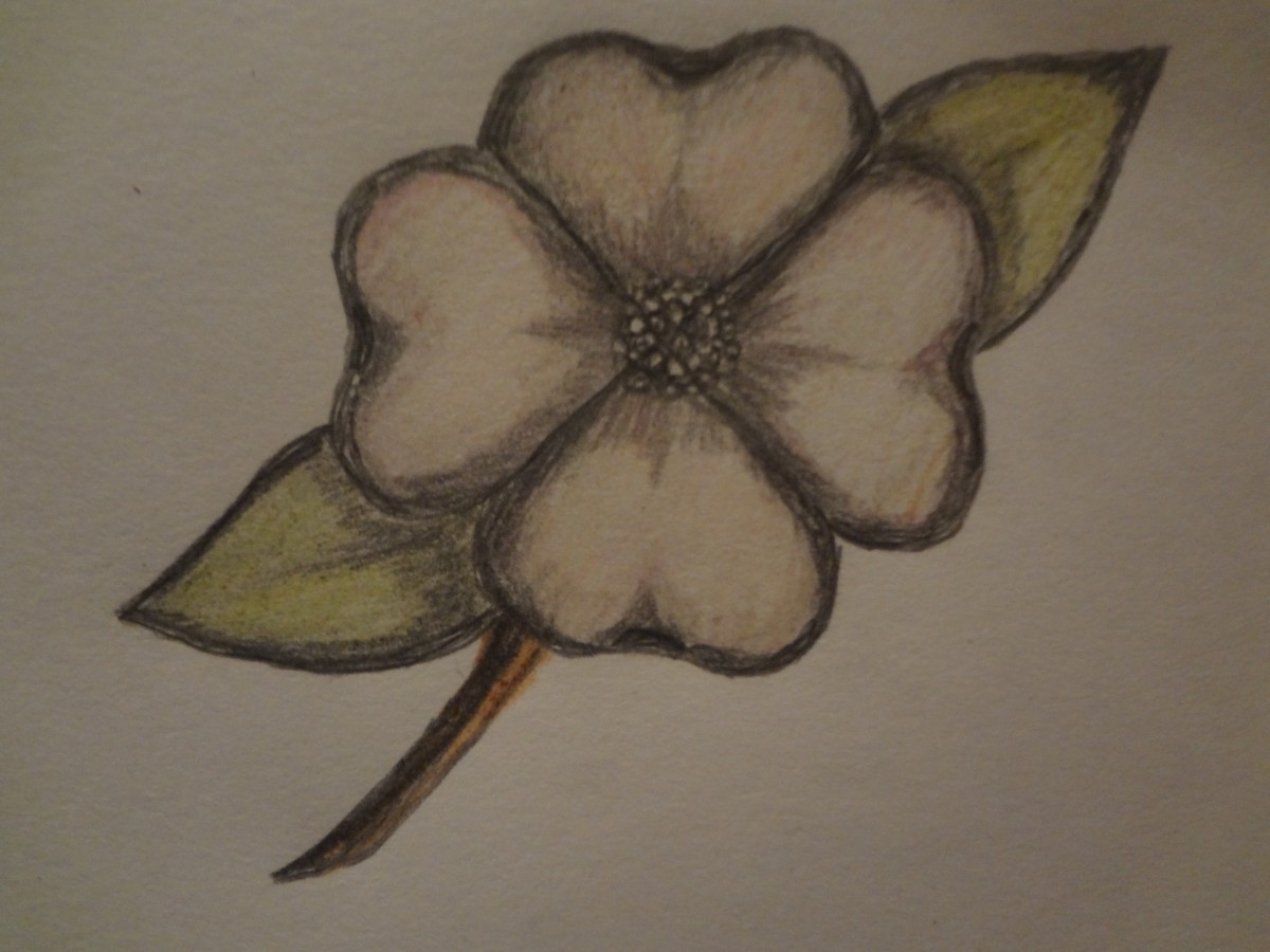 how to draw a dogwood flower