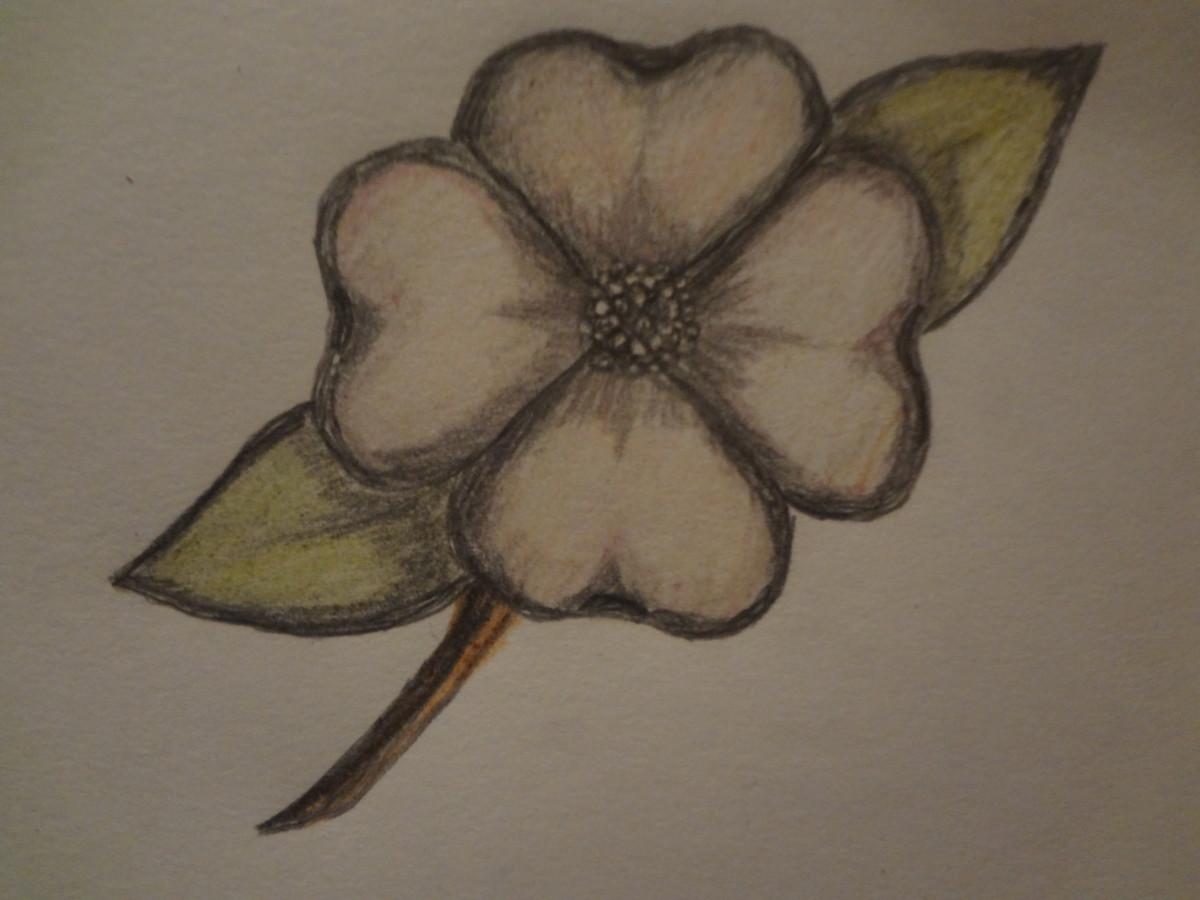 c8255baf4 How to Draw a Dogwood Flower | FeltMagnet