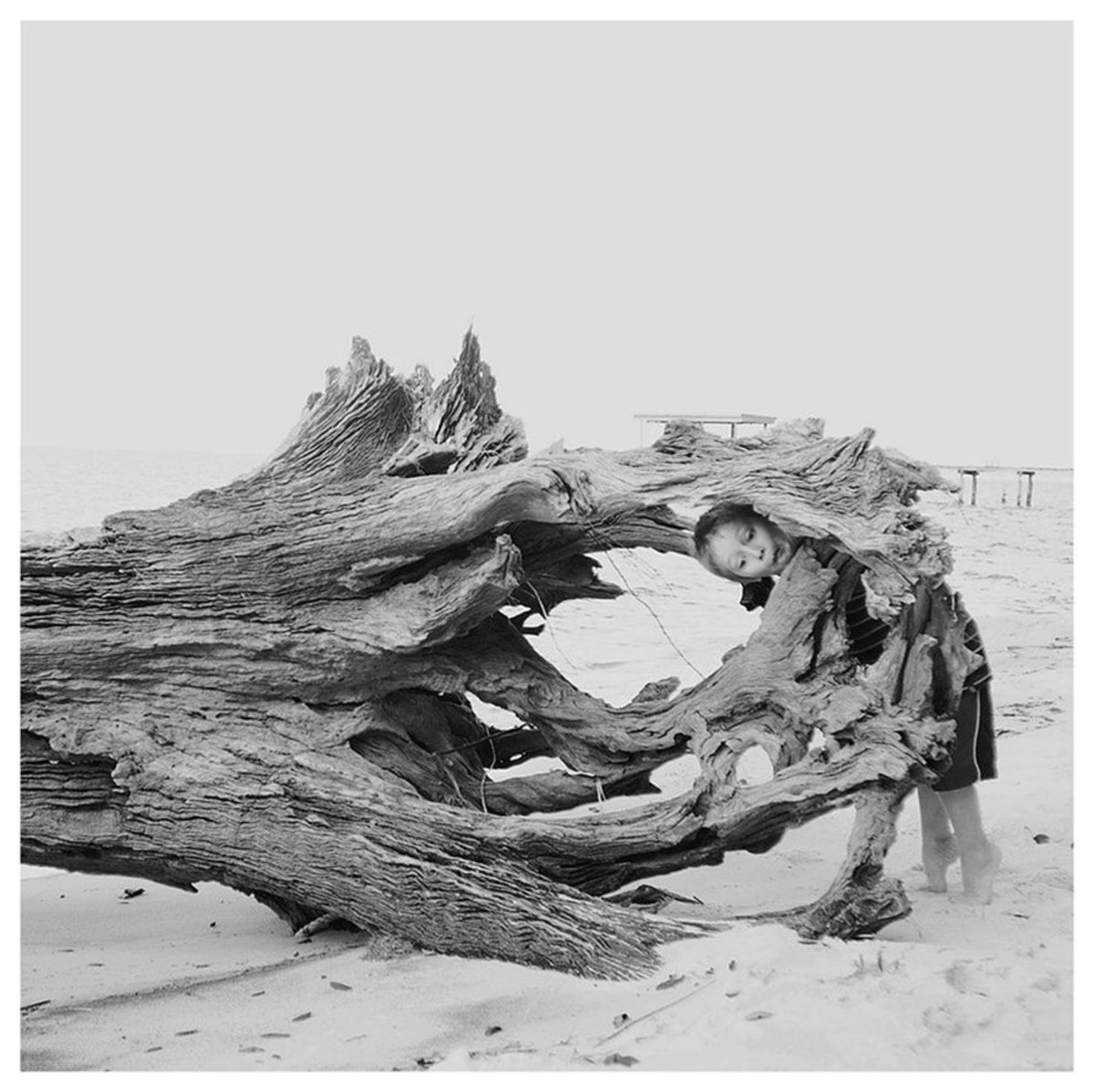 """""""Gulp."""" My son exploring driftwood on a beach at Fort Morgan. His animated exploration was delightful subject matter!"""