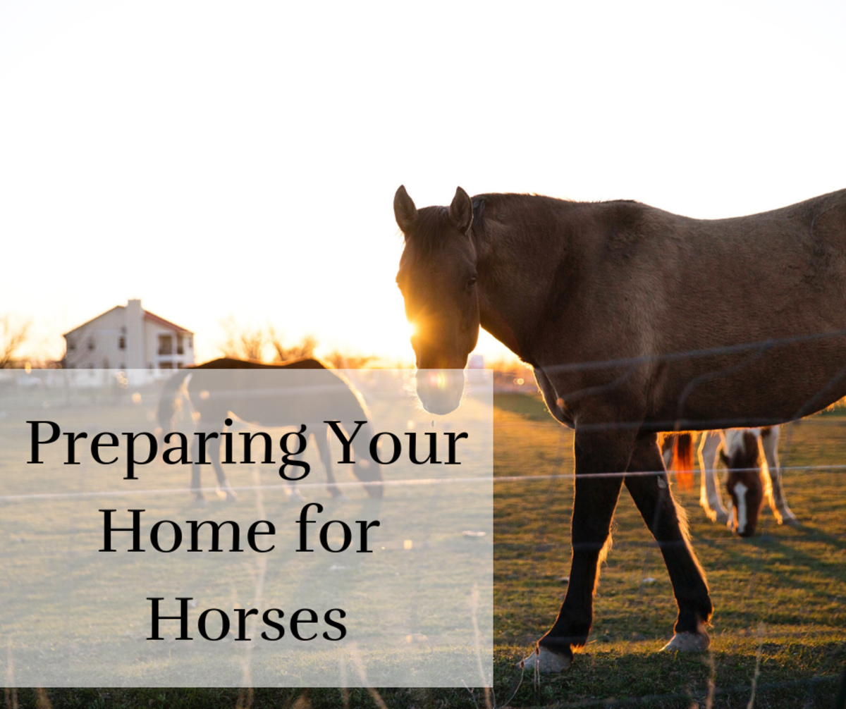 Horses need lots of room, grass for grazing, and a water source.