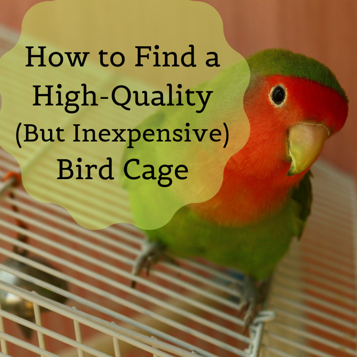 Get some tips on finding a good, long-lasting cage for cheap!