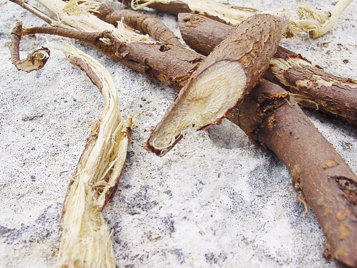 Licorice root is edible, sweet, and delicious.