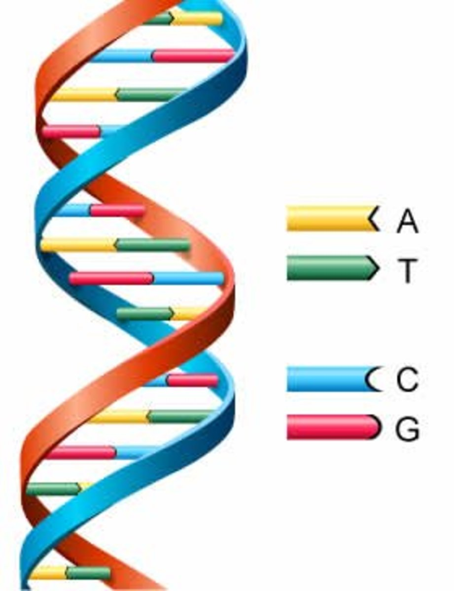 The Secret of Life - the DNA double Helix