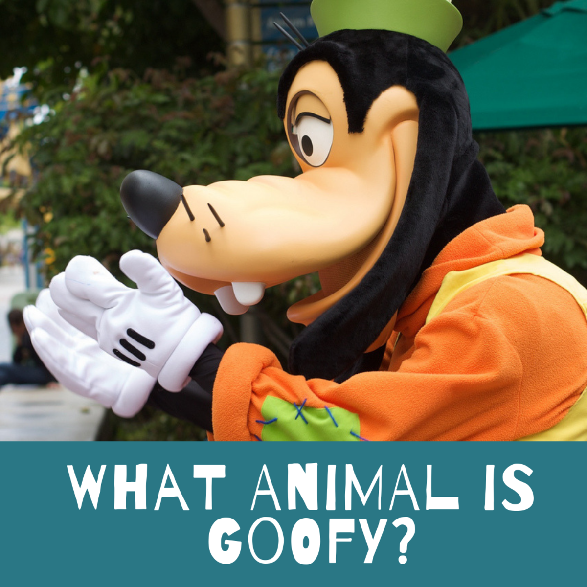 What is Goofy? Dog or cow? The truth about Walt Disney's Goofy cartoon character.