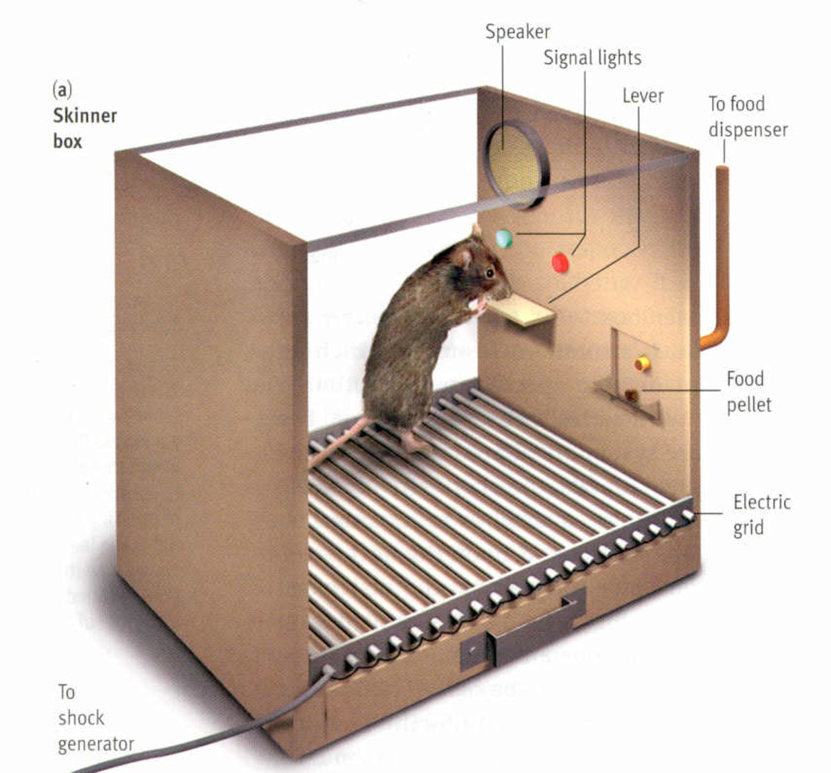 This is a mouse getting a piece of food in a Skinner's Box scenario. This is also you playing an addictive video game. You just don't realize it yet.