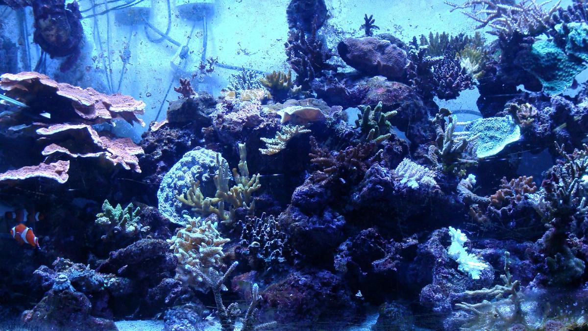 Saltwater aquarium.