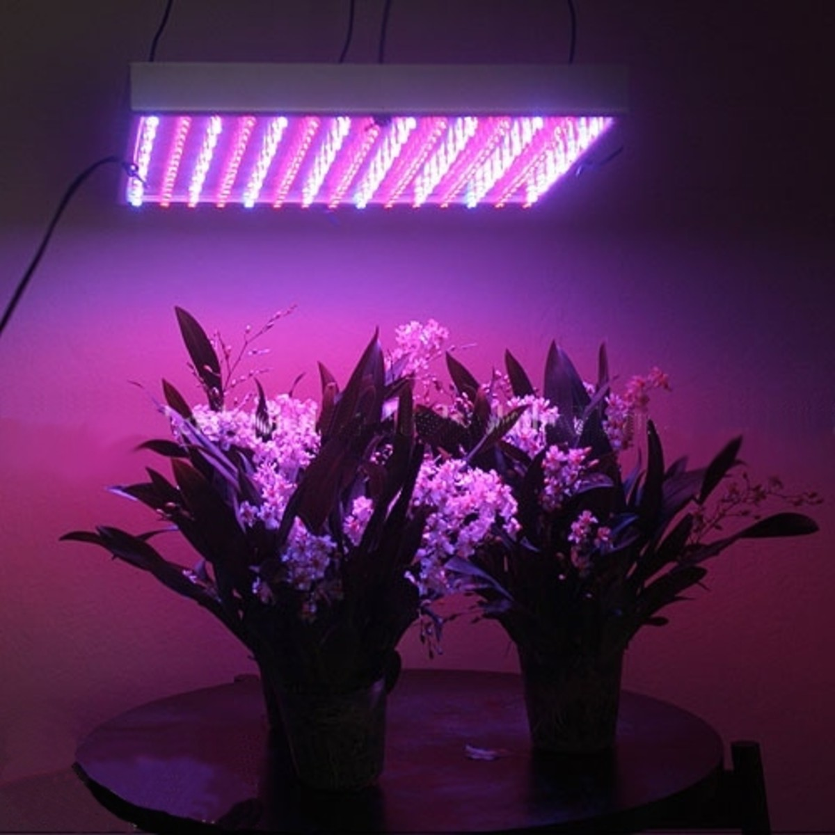 LED grow lights that can be used for growing vegetables indoors.