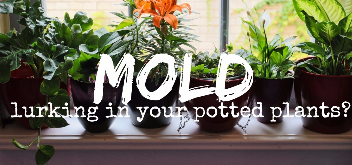 Struggling with moldy soil? Here's how to get rid of it without using chemicals.