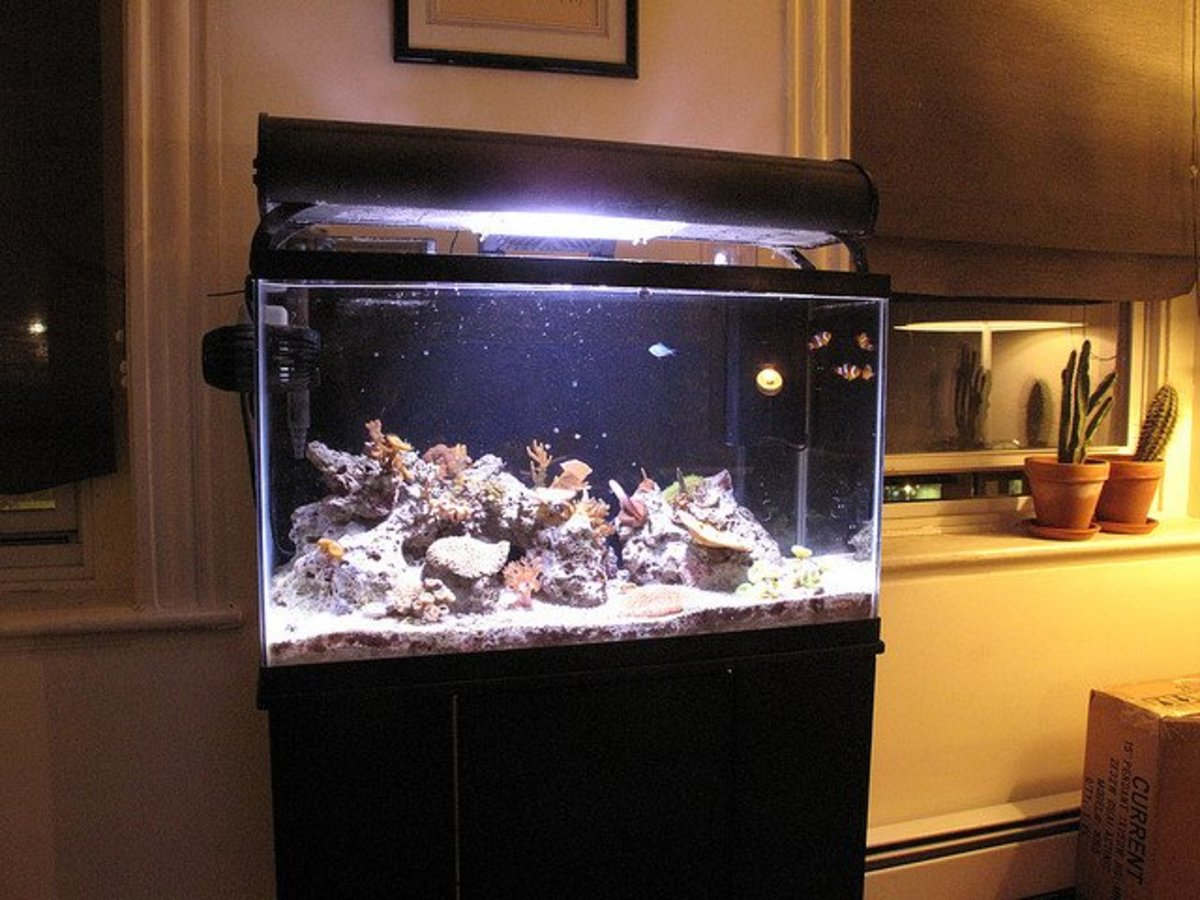 This photo is an example of how a painted background aquarium looks with water.