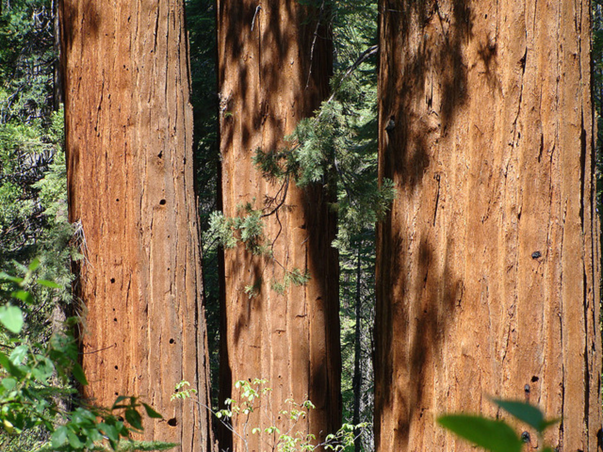 Calaveras Big Trees | A California State Park