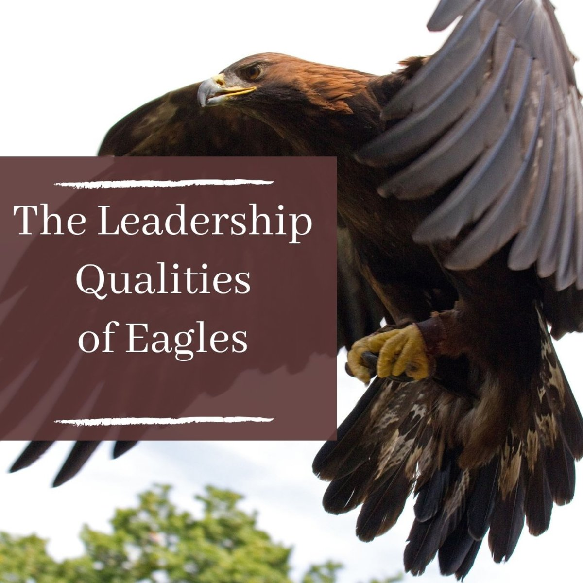 1c420afac97dad 5 Positive Leadership Traits People Can Learn From Eagles