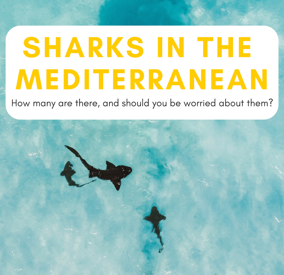 Types of Sharks in the Mediterranean Sea