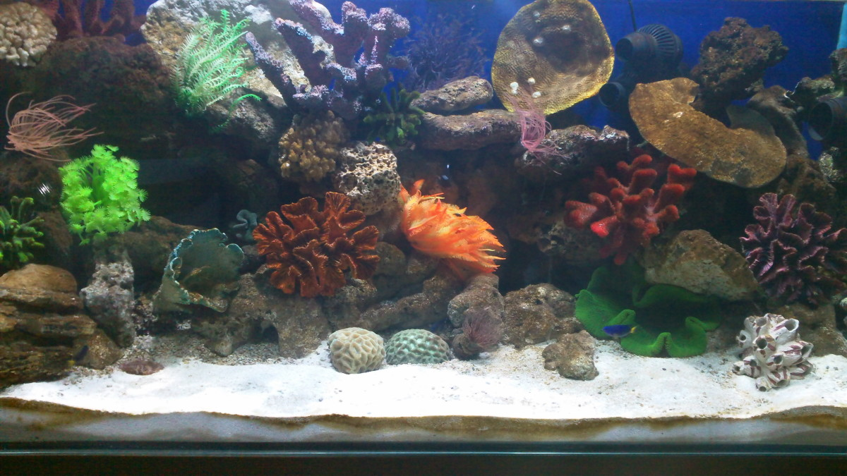 One of the Marine Reef Aquariums recently set up. Dimensions - 48 in x 24 in x 24 in (L x W x H)