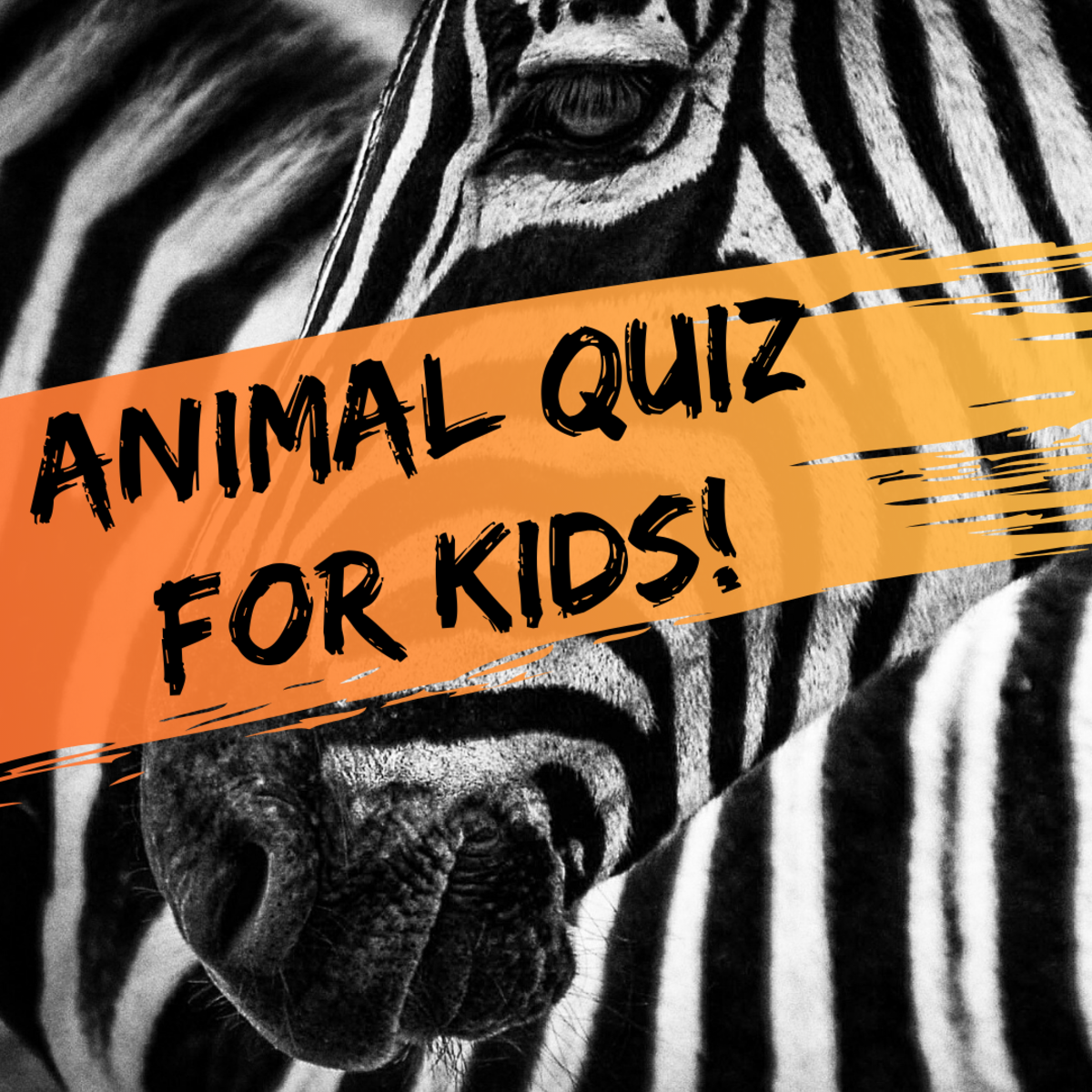 How much do you really know about animals? Find out with this short, fun quiz!