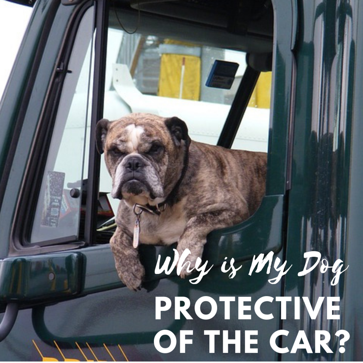 How to Stop a Dog From Acting Protective of the Car
