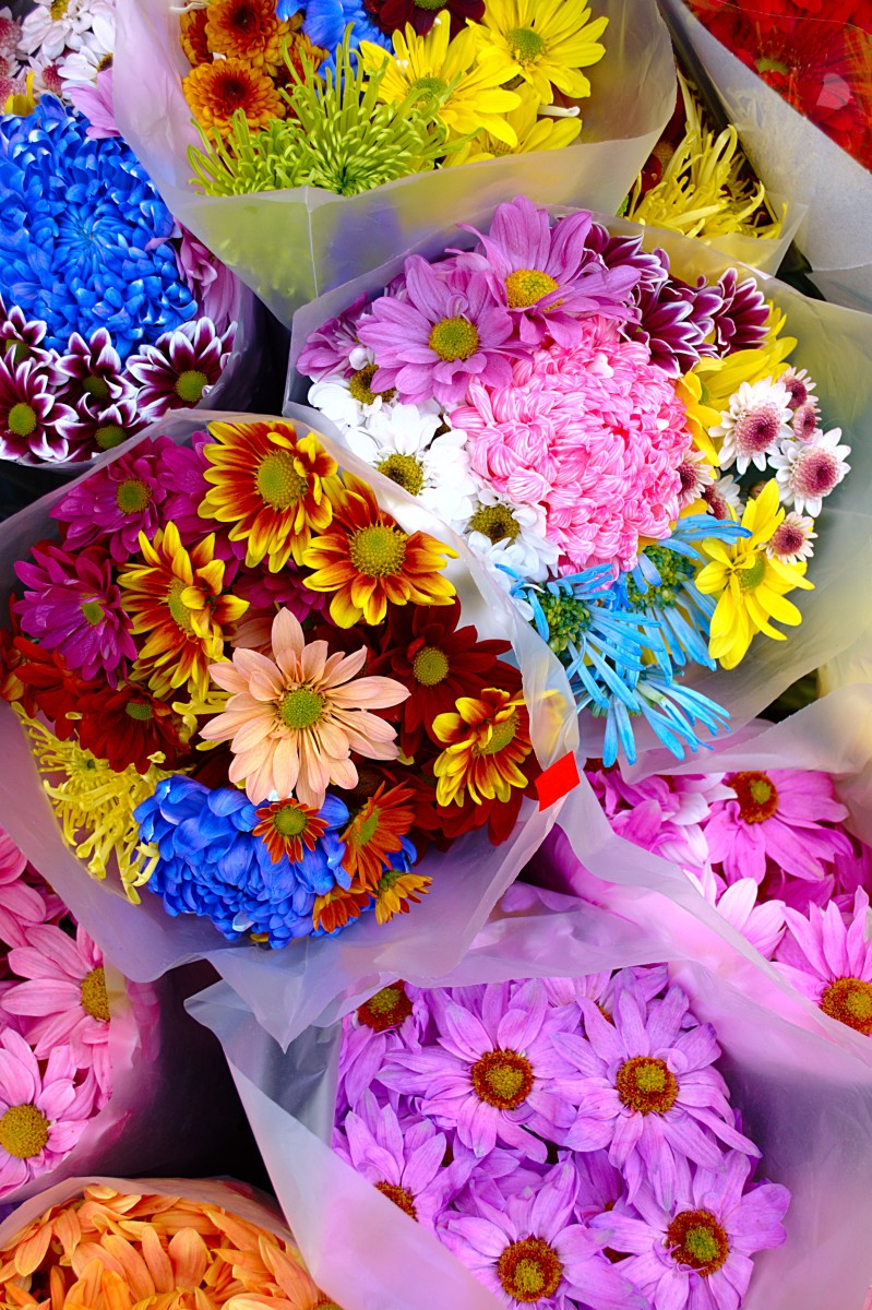 Which Cut Flowers Last Longest?
