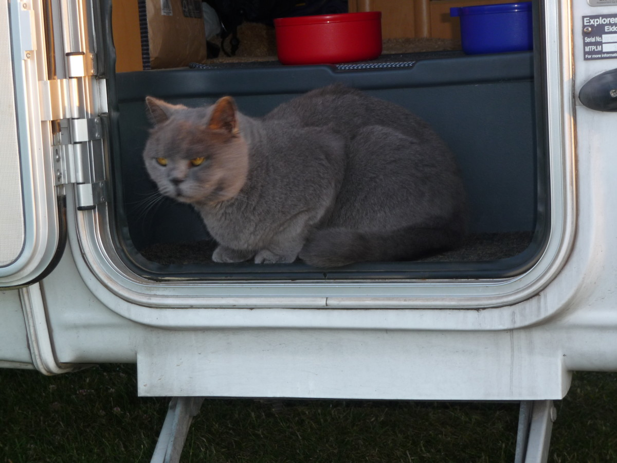 Can You Take Your Cat in Mobile Homes and Motorhomes?