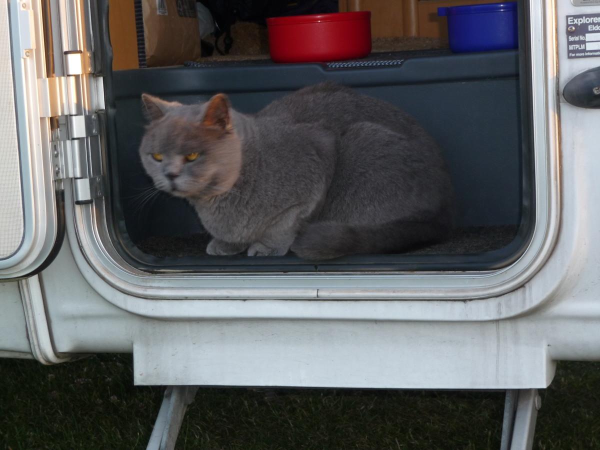Ferocious guard cat