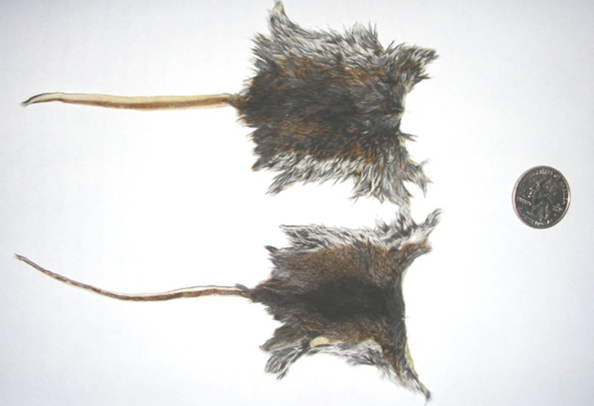 Skinning Mice