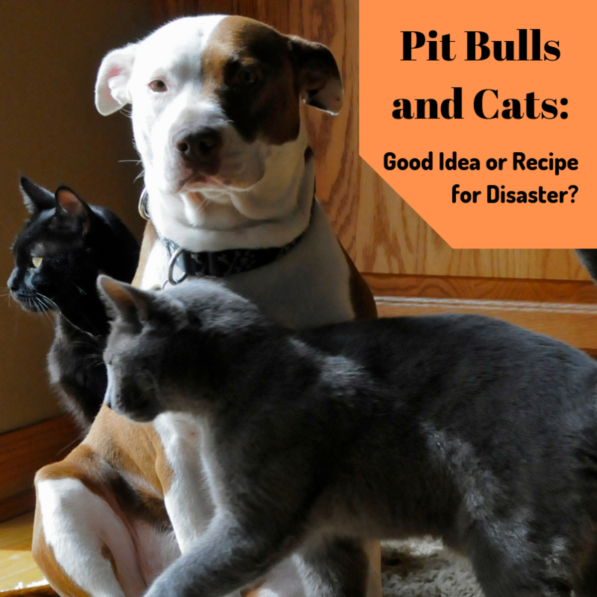 Are pit bulls and cats compatible pets?