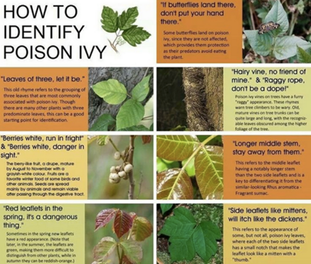 How to Prevent Poison Ivy
