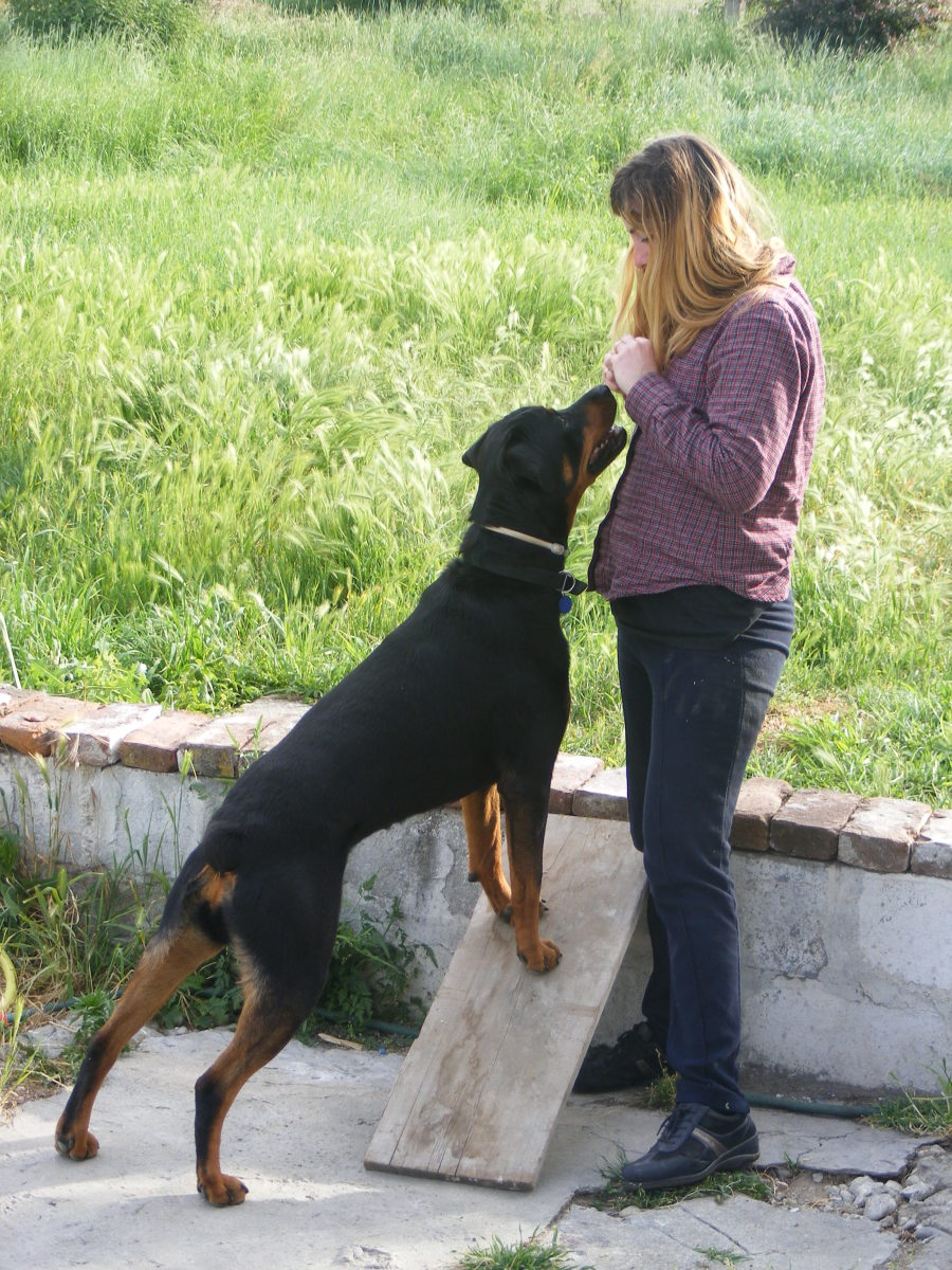 Blocking and overshadowing in dog training