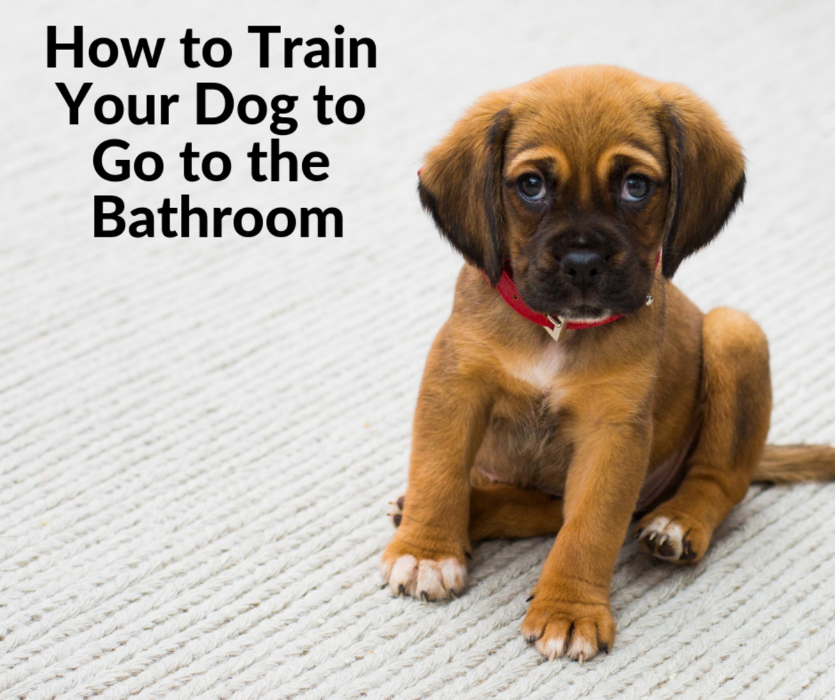How to Train Your Dog to Go to the Bathroom on Command