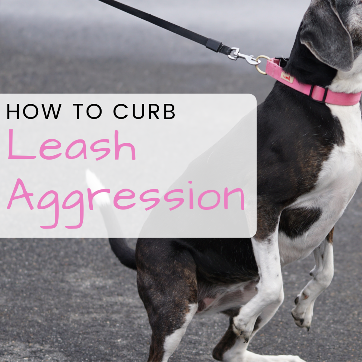 Dog Behavior: How to Stop a Dog From Being Protective on Walks