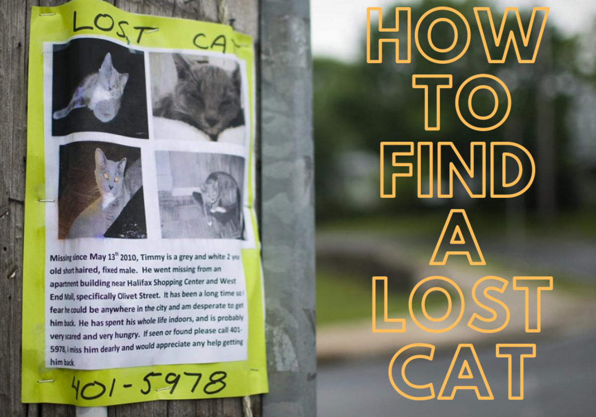 Is your cat missing? Here's how to find a lost pet.