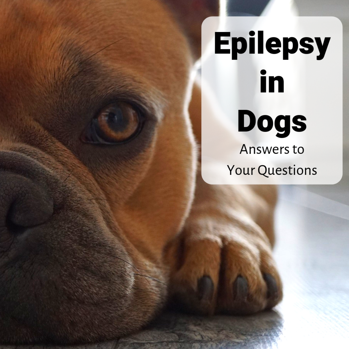 Learn about canine epilepsy based on an interview with a veterinarian.