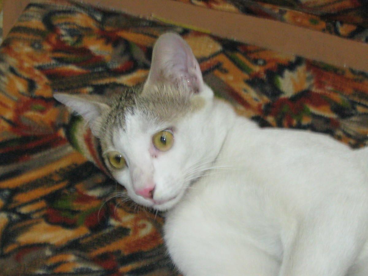 They Killed My Pet Cat Minni Maav
