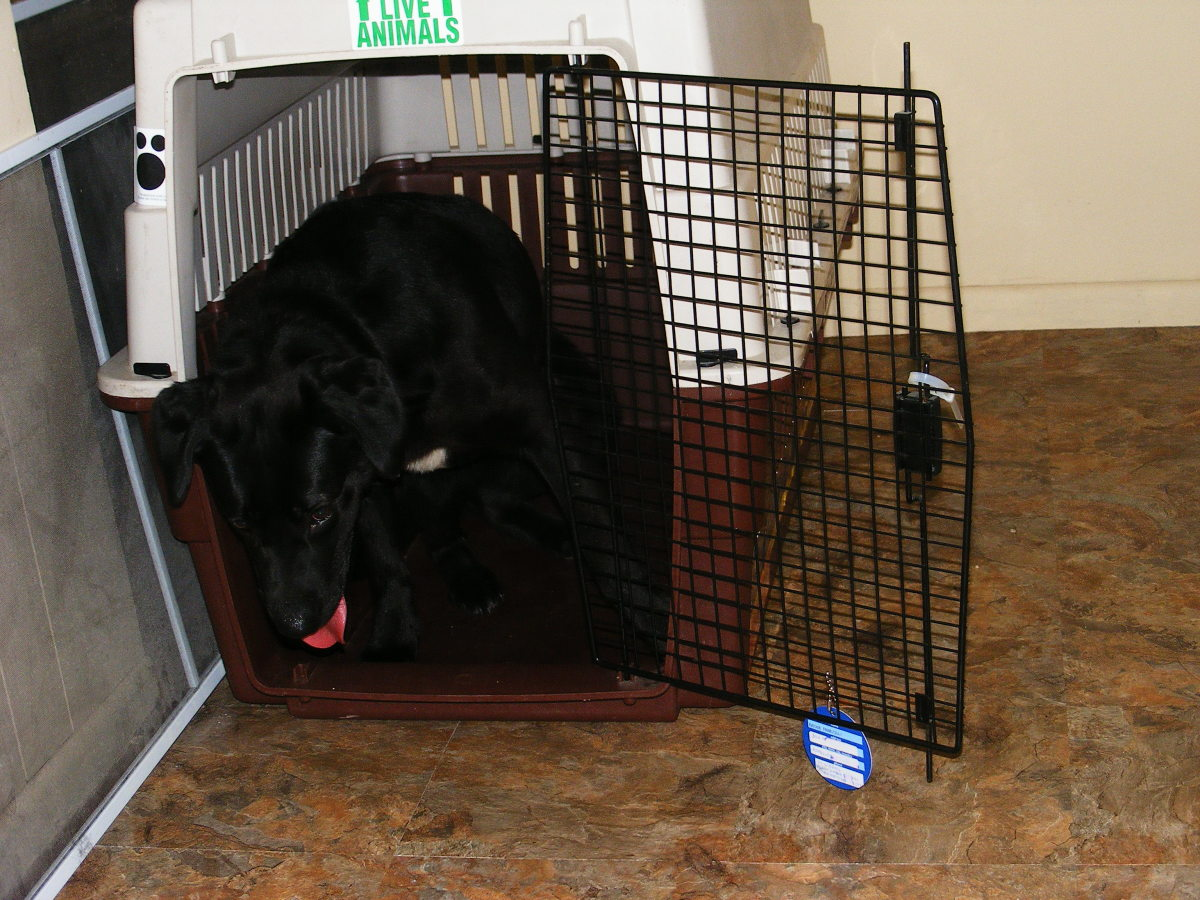 If you're wondering whether to crate your dog, read on.