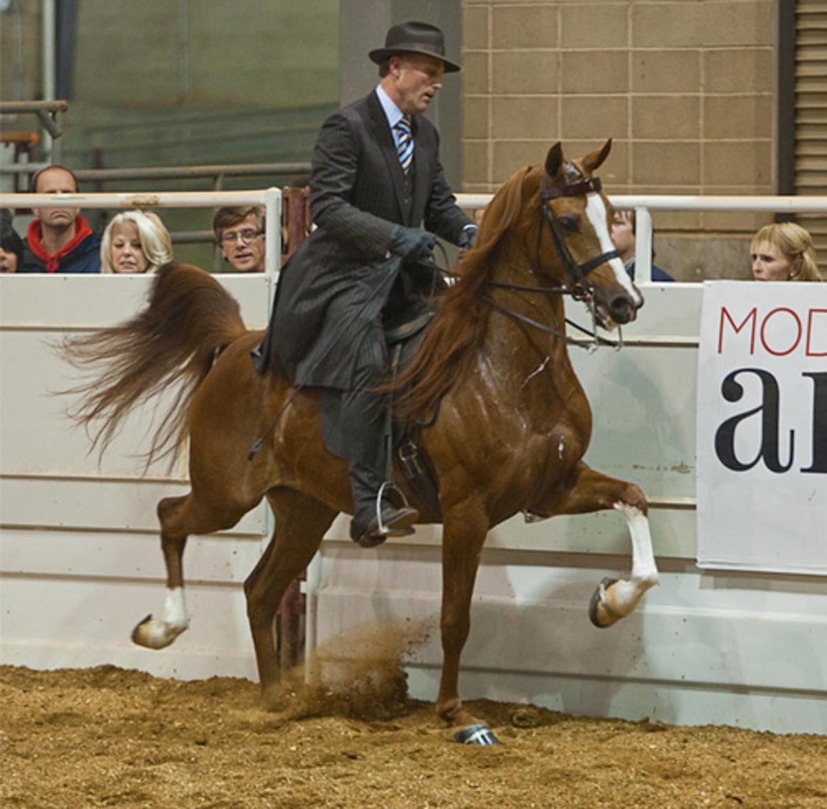 Arabians are believed to be the oldest purebred horses in existence.
