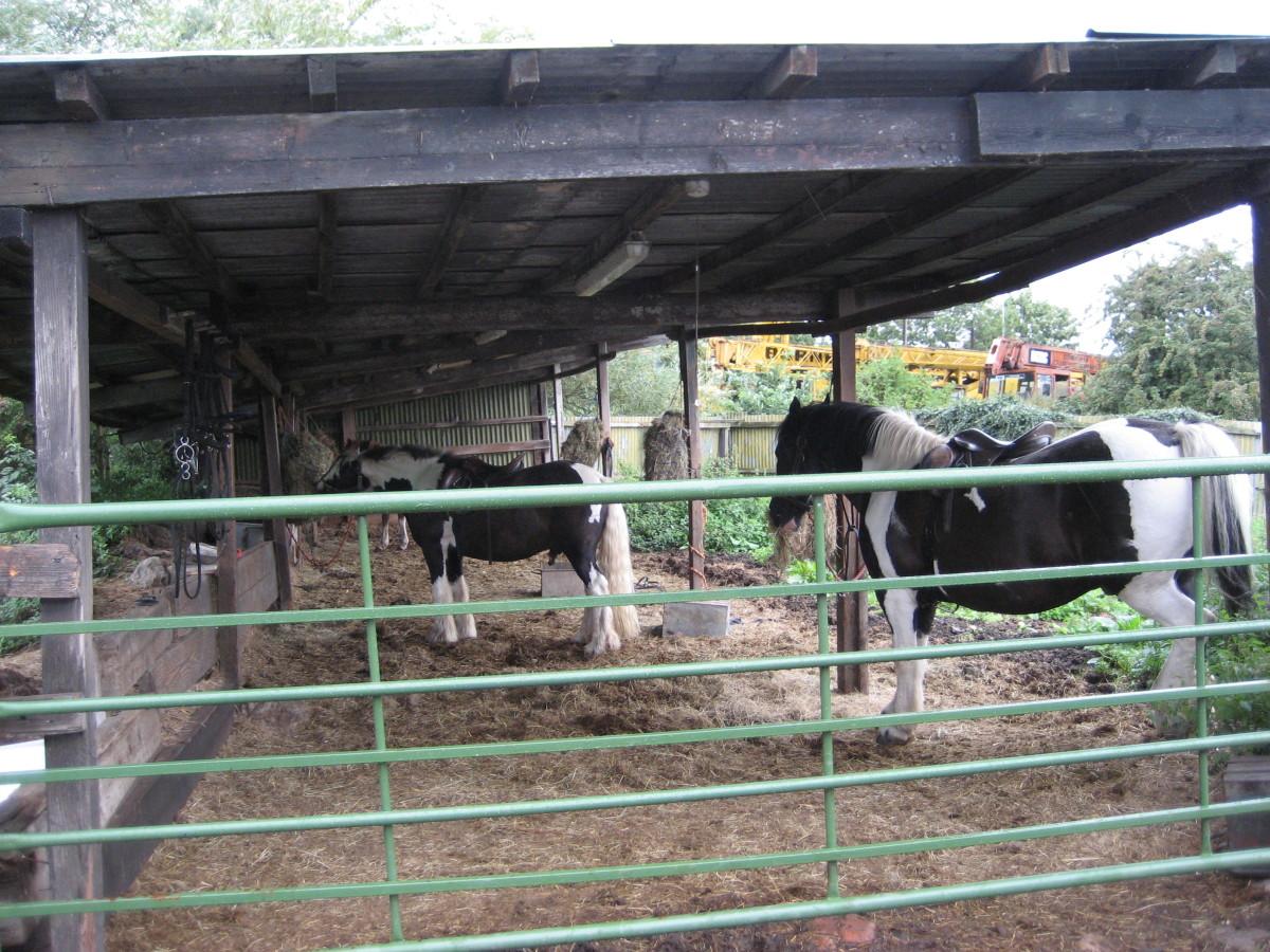 Colored cobs wait their turn in an English barn.