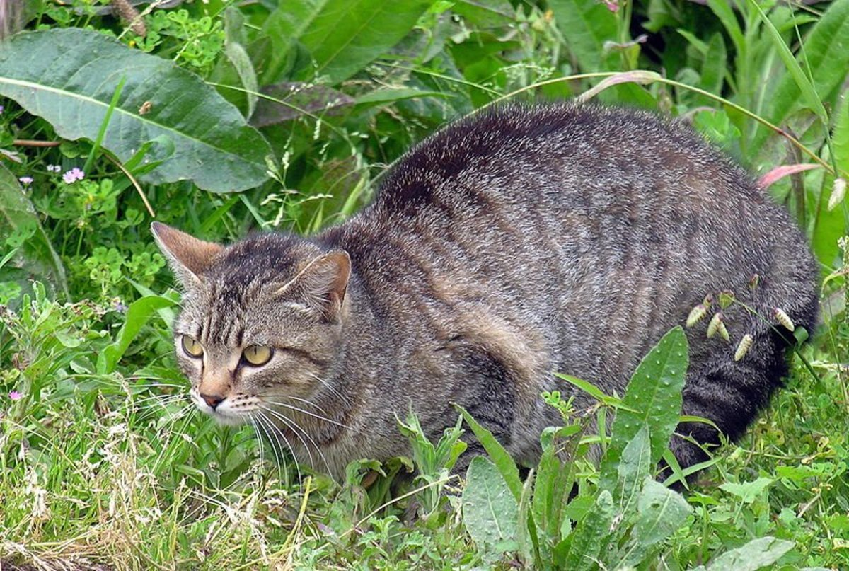 Cats are cute, but they can damage your garden or yard when they trespass!