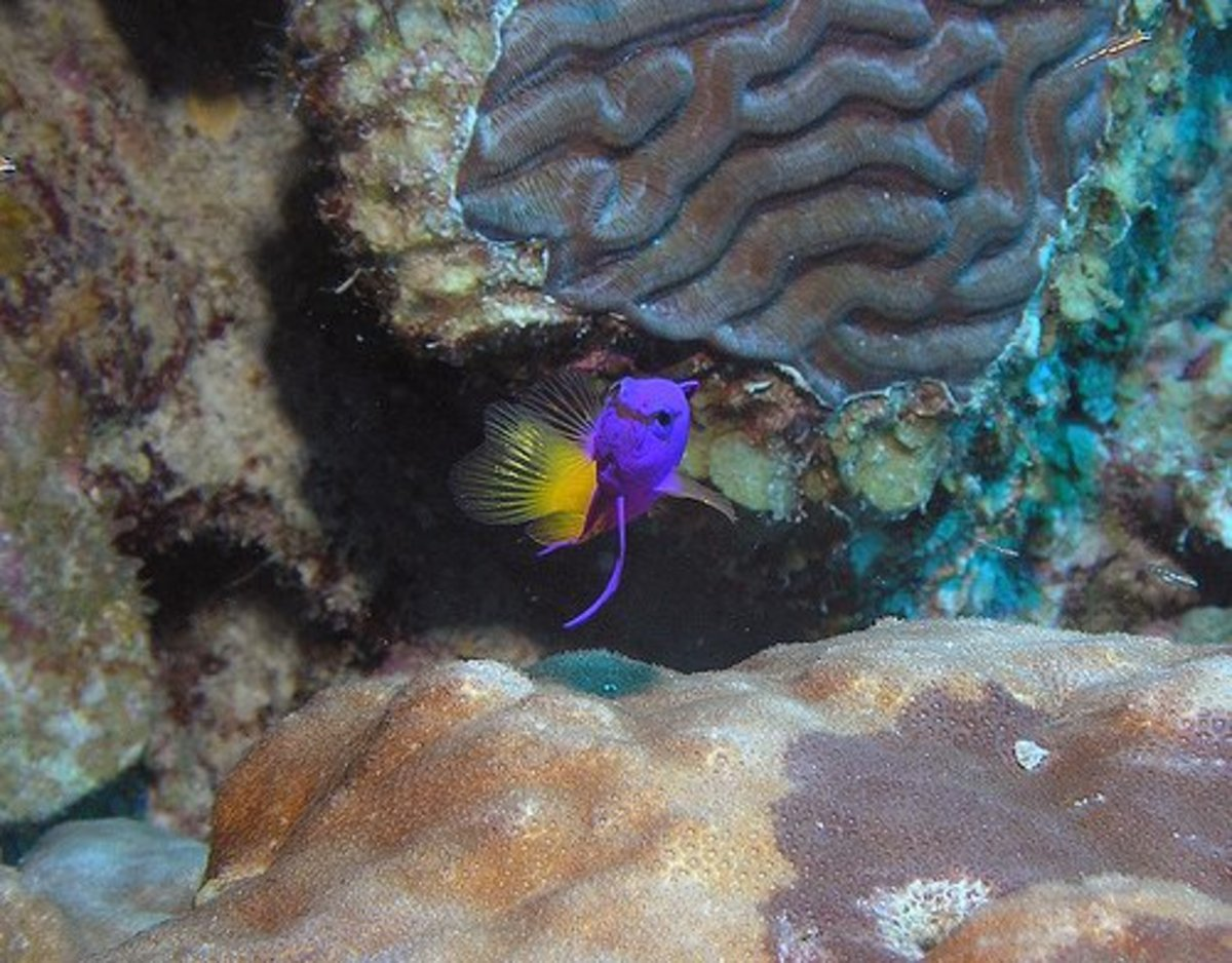 choosing-the-best-fish-to-cycle-a-new-saltwater-tank