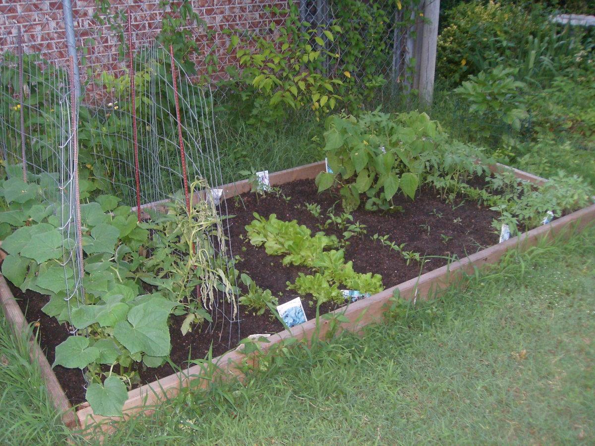 My raised vegetable garden